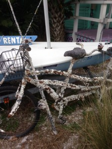 barnacle-encrusted tandem bike and fishing pole on AMI